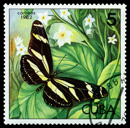 cuba butterfly: CUBA - CIRCA 1982: A stamp printed in Cuba shows  butterfly  Heliconius charithonius ramsdeni , series Butterflies, circa 1982.