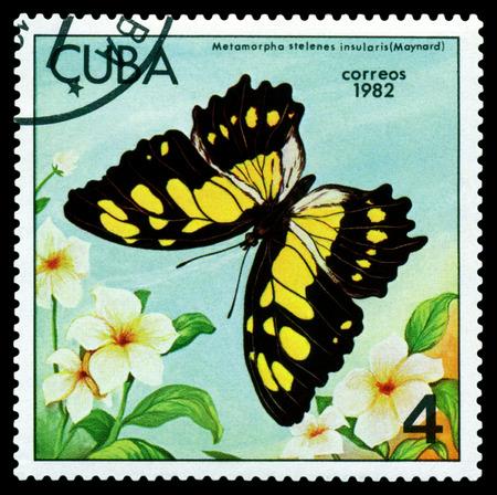 cuba butterfly: CUBA - CIRCA 1982: A stamp printed in Cuba shows butterfly  Metamarpha stelenes insularis (Maynard), series Butterflies, circa 1982.