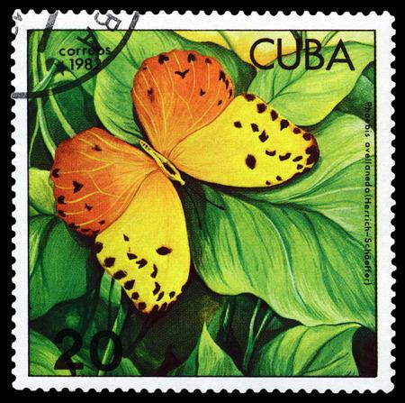 CUBA - CIRCA 1982: A stamp printed in Cuba shows butterfly  Phoebis avellaneda, series Butterflies, circa 1982. Editorial