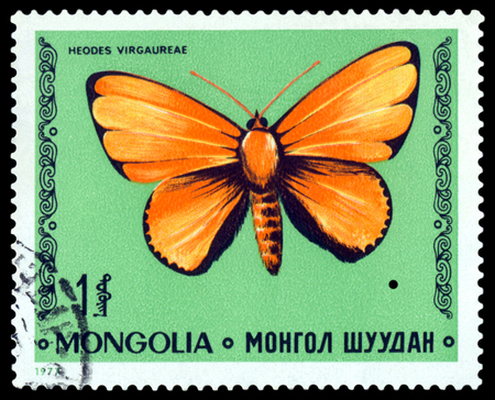 MONGOLIA - CIRCA 1977: A stamp printed in Mongolia shows butterfly Heodes Virgaureae, series Butterflies, circa 1977. Editorial