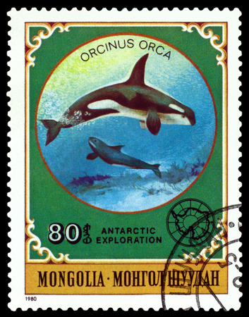 philately: MONGOLIA - CIRCA 1980: a stamp printed by Mongolia  shows  Grampus,  Antarctic Animals and exploration,  circa 1980