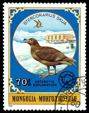 MONGOLIA - CIRCA 1980: a stamp printed by Mongolia  shows  Stercorarius Skua,  Antarctic Animals and exploration,  circa 1980