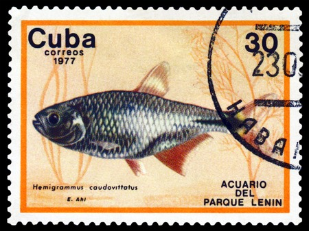 postmark: CUBA - CIRCA 1977: a stamp printed by Cuba  show the fishes with the inscription  Hemigrammus caudovittatus, Lenin Park Aquarium, Havana.  Series, circa 1977 Editorial