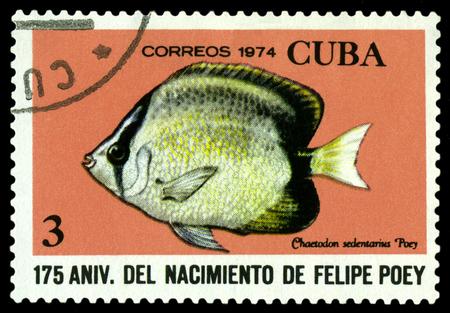 philately: CUBA - CIRCA 1974: A stamp printed in Cuba shows fish Chaetodon sedentarius,  series Felipe Poey, Naturalist, circa 1974.