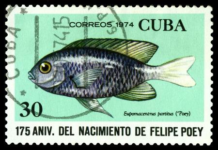 cuba butterfly: CUBA - CIRCA 1974: A stamp printed in Cuba shows fish Eupomacentrus partitus,  series Felipe Poey, Naturalist, circa 1974. Editorial