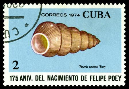 postmark: CUBA - CIRCA 1974: A stamp printed in Cuba shows shellfish Pineria terebra,  series Felipe Poey, Naturalist, circa 1974.