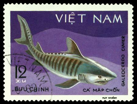 VIETNAM - CIRCA 1980: A stamp printed in Vietnam, shows  Galeocerdo Cuvier, circa 1980