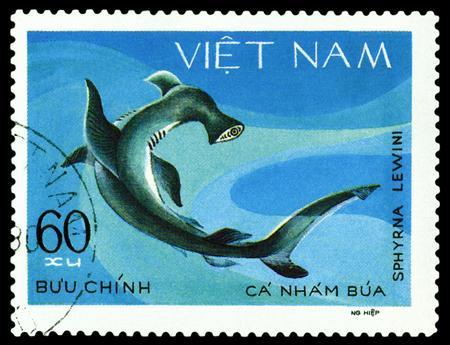 ichthyology: VIETNAM - CIRCA 1980: A stamp printed in Vietnam, shows Sphyrna Lewini, circa 1980