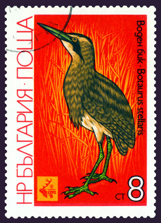 bittern: BULGARIA- CIRCA 1981: A stamp printed in Bulgaria  shows  bird  Bird Bittern, series EXPO 81, Plovdiv , circa 1981. Editorial