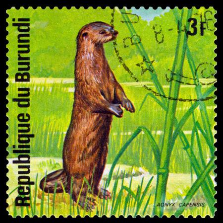 burundi: BURUNDI - CIRCA 1975: A stamp printed by Burundi shows African small-clawed otter, Animals Burundi, circa 1975. Editorial