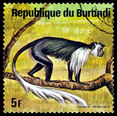 BURUNDI - CIRCA 1975: A stamp printed by Burundi shows  Colobus Monkey, Animals Burundi, circa 1975. Sajtókép