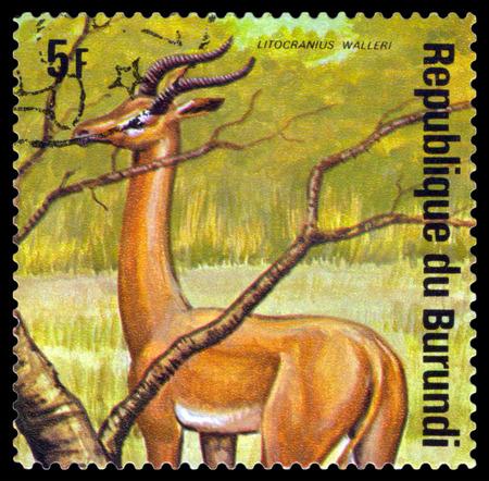 burundi: BURUNDI - CIRCA 1975: A stamp printed by Burundi shows  Gerenuk, Animals Burundi, circa 1975. Editorial