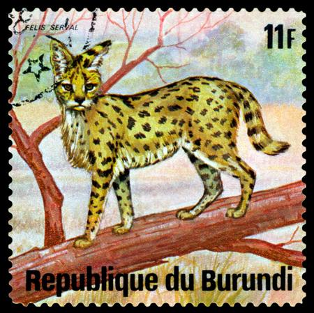 BURUNDI - CIRCA 1975: A stamp printed by Burundi shows Felis Serval, Animals Burundi, circa 1975.