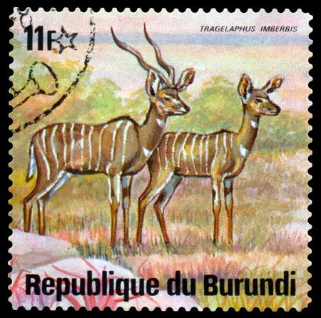 BURUNDI - CIRCA 1975: A stamp printed by Burundi shows Lesser Kudus, Animals Burundi, circa 1975. Sajtókép