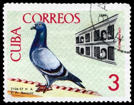philately: CUBA - CIRCA 1966: A stamp printed by Cuba, shows  Birds. Coops, Baracoa to Havana championship flight, 1959, circa 1966 Editorial