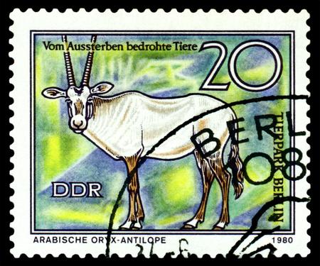 gdr: GDR - CIRCA 1980: A stamp printed in  GDR,  shows  Arabian oryx, series  Tierpark, Berlin, circa 1980