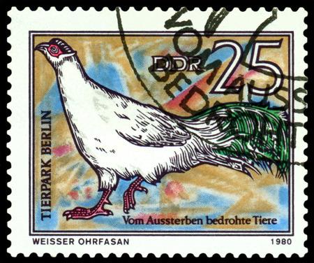 gdr: GDR - CIRCA 1980: A stamp printed in  GDR,  shows  bird  White-eared pheasant, series  Zoo, Berlin, circa 1980