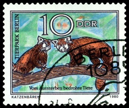 gdr: GDR - CIRCA 1980: A stamp printed in  GDR,  shows  Wild cats, series  Zoo, Berlin, circa 1980