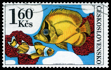 amphiprion: CZECHOSLOVAKIA - CIRCA 1975: a stamp printed by Czechoslovakia  show Aquarium  Fish Amphiprion percula and chaetodon, circa 1975 Editorial