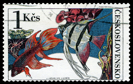 pterophyllum: CZECHOSLOVAKIA - CIRCA 1975: a stamp printed by Czechoslovakia  show Aquarium  Fish  Beta splendes regan and pterophyllum scalare, circa 1975