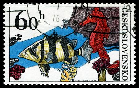 CZECHOSLOVAKIA - CIRCA 1975: a stamp printed by Czechoslovakia  show Aquarium  Fish Datrioides Microlepis and Sea Horse, circa 1975