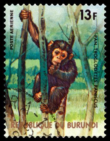 BURUNDI CIRCA 1977: A stamp printed by Burundi shows Chimpanzee Monkey Animals Burundi circa 1977. Sajtókép
