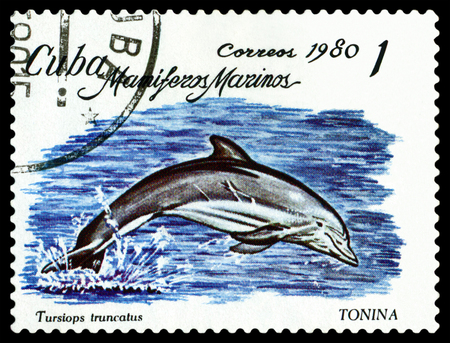 freshwater: CUBA CIRCA 1980: a stamp printed by Cuba shows Bottlenose dolphin. Marine Mammals circa 1980