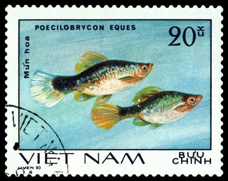 ornamental fish: VIETNAM CIRCA 1980: Un francobollo stampato in Vietnam mostra pesci Poecilobrycon eques pesci ornamentali circa 1980 Editoriali