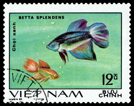 ichthyology: VIETNAM CIRCA 1980: A stamp printed in Vietnam shows Betta Splendens circa 1980 Editorial