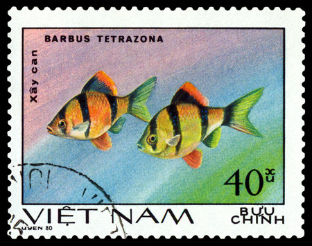 barbus: VIETNAM CIRCA 1980: A stamp printed in Vietnam shows fishes Barbus Tetrazona Ornamental Fish circa 1980