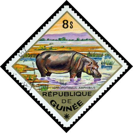 guinee: REPUBLIQUE DE GUINEE CIRCA 1976: a stamp printed by Republique de Guinee shows Hippopotamus to Africa series animals Africa circa 1976