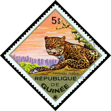 guinee: REPUBLIQUE DE GUINEE CIRCA 1976: a stamp printed by Republique de Guinee shows Panthera pardus Leopard series animals Africa circa 1976 Editorial