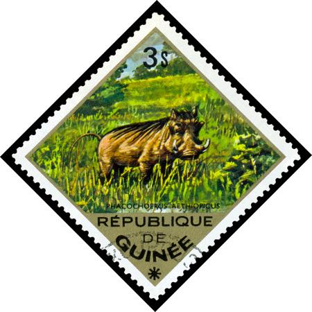 guinee: REPUBLIQUE DE GUINEE CIRCA 1976: a stamp printed by Republique de Guinee shows Desert warthog Phacochoerus aethiopicus series animals Africa circa 1976 Stock Photo