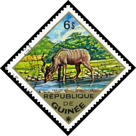 guinee: REPUBLIQUE DE GUINEE CIRCA 1976: a stamp printed by Republique de Guinee shows Greater kudu Tragelaphus strepsiceros series animals Africa circa 1976 Stock Photo
