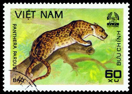 pardus: VIETNAM - CIRCA 1981: A stamp printed in Vietnam shows Leopard Panthera pardus, circa 1981 Editorial