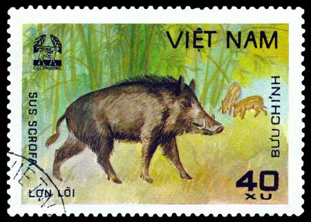 scrofa: VIETNAM - CIRCA 1981: A stamp printed in Vietnam shows Wild boar, Sus scrofa, circa 1981