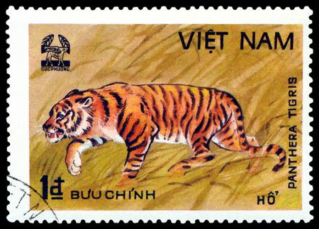 panthera tigris: VIETNAM - CIRCA 1981: A stamp printed in Vietnam shows Tiger Panthera Tigris, Scott 2004 catalogue number 1763, circa 1981 Editorial