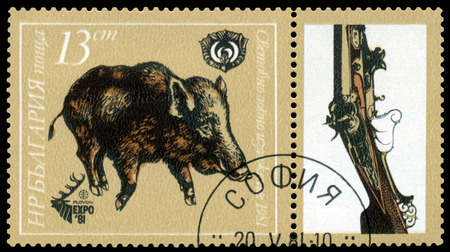 81: BULGARIA - CIRCA 1981: A stamp printed by  Bulgaria shows  image  Boar,  Plovdiv, EXPO 81, circa 1981