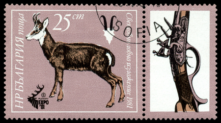 81: BULGARIA - CIRCA 1981: A stamp printed by  Bulgaria shows  image  Mountain goat,  Plovdiv, EXPO 81, circa 1981 Editorial