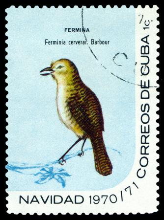 CUBA - CIRCA 1970: A stamp printed by Cuba, shows  bird  Zapata Wren, Ferminia cerverai , circa 1970