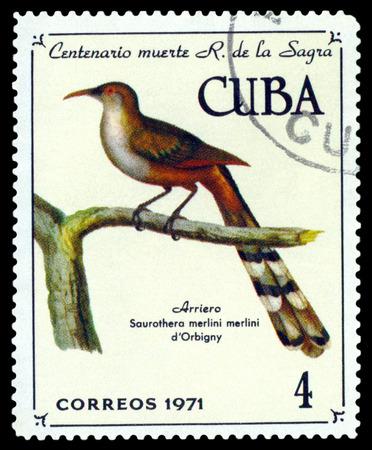 mago merlin: CUBA - CIRCA 1971: Un sello impreso por Cuba, muestra Saurathera p�jaro Merlin, Saurathera merlini,, alrededor del a�o 1971