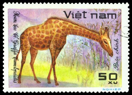 VIETNAM - CIRCA 1981: A stamp pr8inted in Vietnam shows, circa 1981