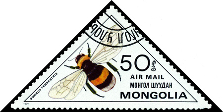 bombus: MONGOLIA - CIRCA 1979: A stamp printed in Mongolia shows the bee Bumblebee Bombus terrestris, series Insects, circa 1979. Editorial