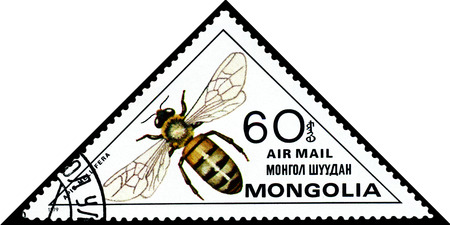 mellifera: MONGOLIA - CIRCA 1979: A stamp printed in Mongolia shows Honey bee Apis Mellifera, series Insects, circa 1979.