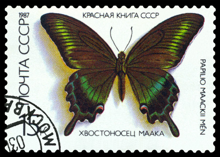 red book: RUSSIA - CIRCA 1987: A stamp printed in Russia shows butterfly Papilio maacki , series The Red Book of the USSR, circa 1987. Editorial