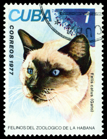 wild cat: STAVROPOL, RUSSIA - NOVEMBER 19: A stamp printed in Cuba, shows wild Cat, series, circa 1977