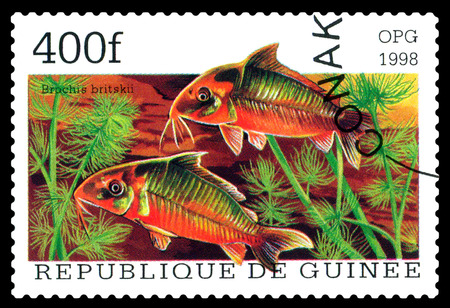 aquarium hobby: STAVROPOL, RUSSIA - APRIL 30, 2016: a stamp printed  in Republique de Guinee  show the fishes Brochis britskii, series, circa 1998 Stock Photo