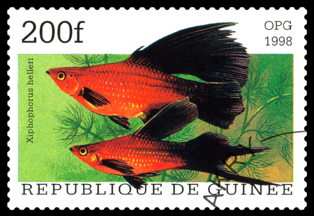 guinee: STAVROPOL, RUSSIA - APRIL 30, 2016: a stamp printed  in Republique de Guinee  show the fishes Xiphophorus helleri, series, circa 1998 Stock Photo