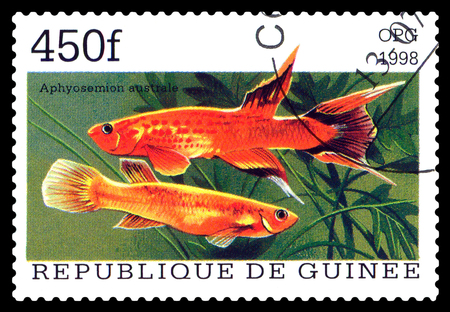 guinee: STAVROPOL, RUSSIA - APRIL 30, 2016: a stamp printed  in Republique de Guinee  show the fishes Aphyosemion australe, series, circa 1998