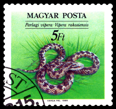 STAVROPOL, RUSSIA - JULY 25, 2016: a stamp printed by Hungary, shows Vipera Rakosiensis (Orsinis viper), Snakes,, circa 1989